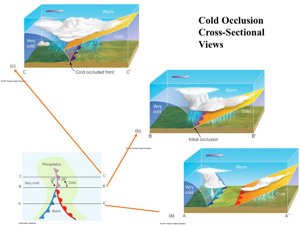 Cold Occlusion Cross-Sectional Views