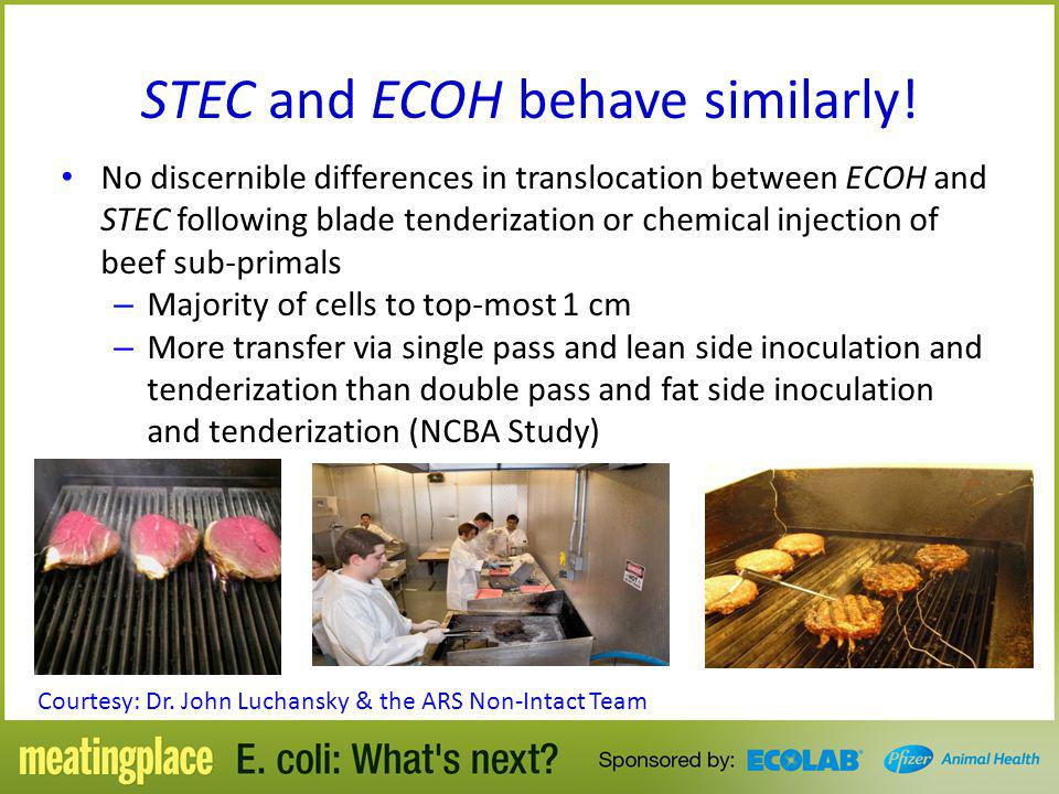 STEC and ECOH behave similarly!