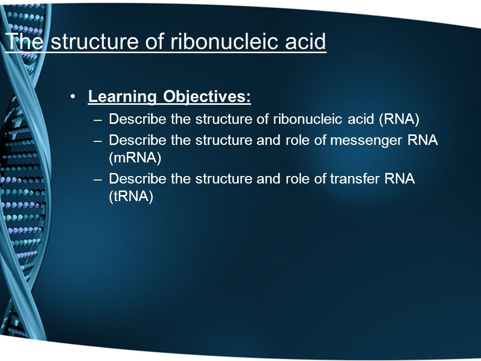The structure of ribonucleic acid
