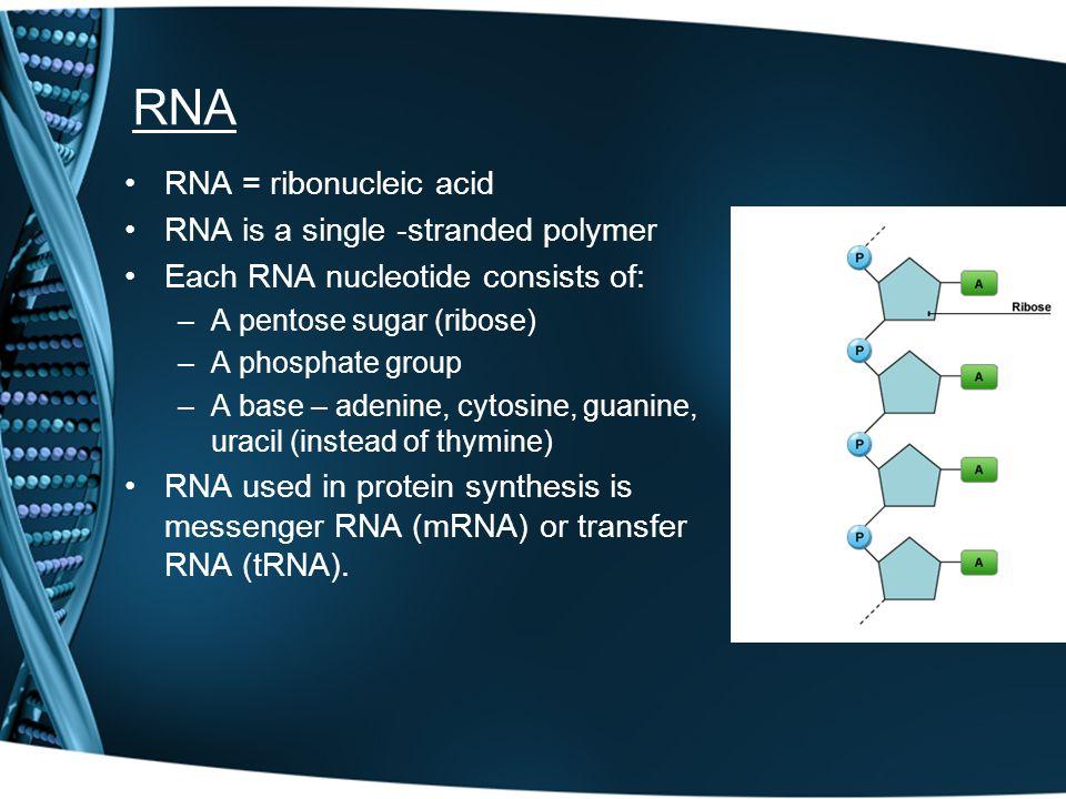 RNA RNA = ribonucleic acid RNA is a single -stranded polymer