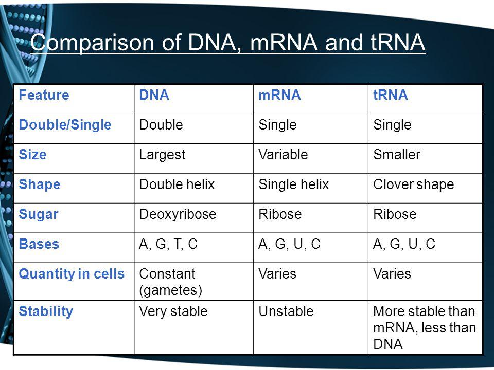 Comparison of DNA, mRNA and tRNA