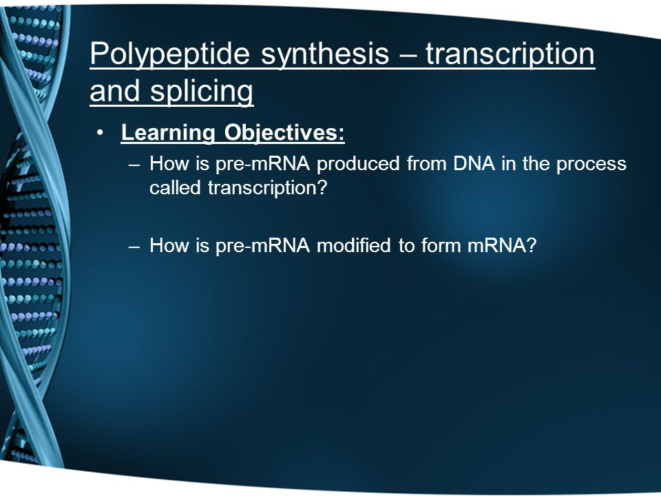 Polypeptide synthesis – transcription and splicing