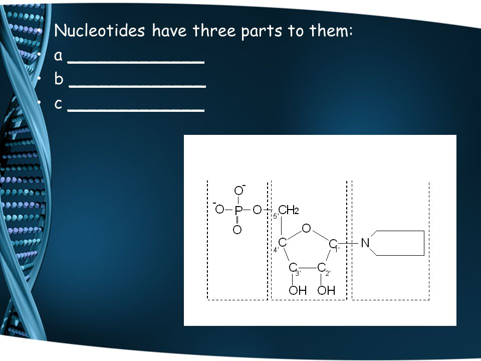 Nucleotides have three parts to them: