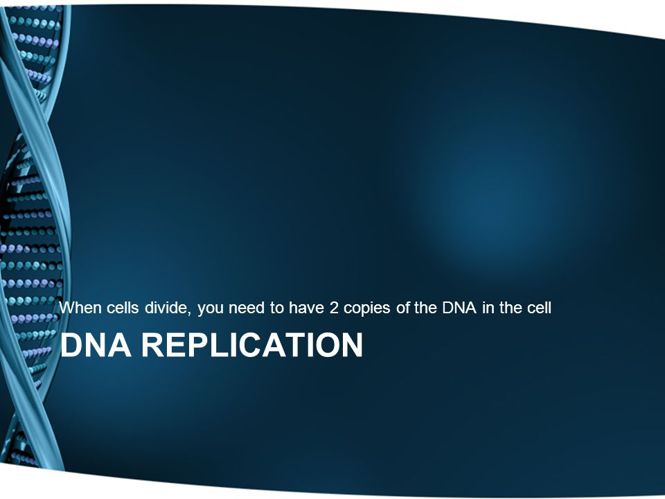 When cells divide, you need to have 2 copies of the DNA in the cell
