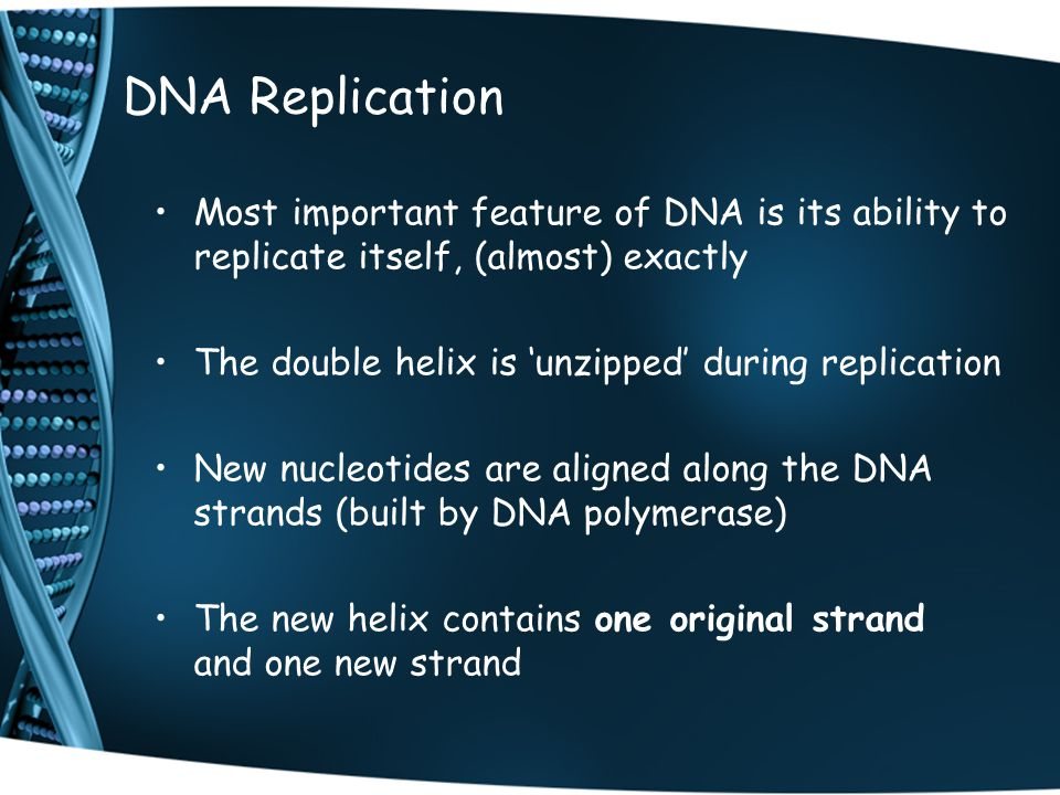 DNA Replication Most important feature of DNA is its ability to replicate itself, (almost) exactly.