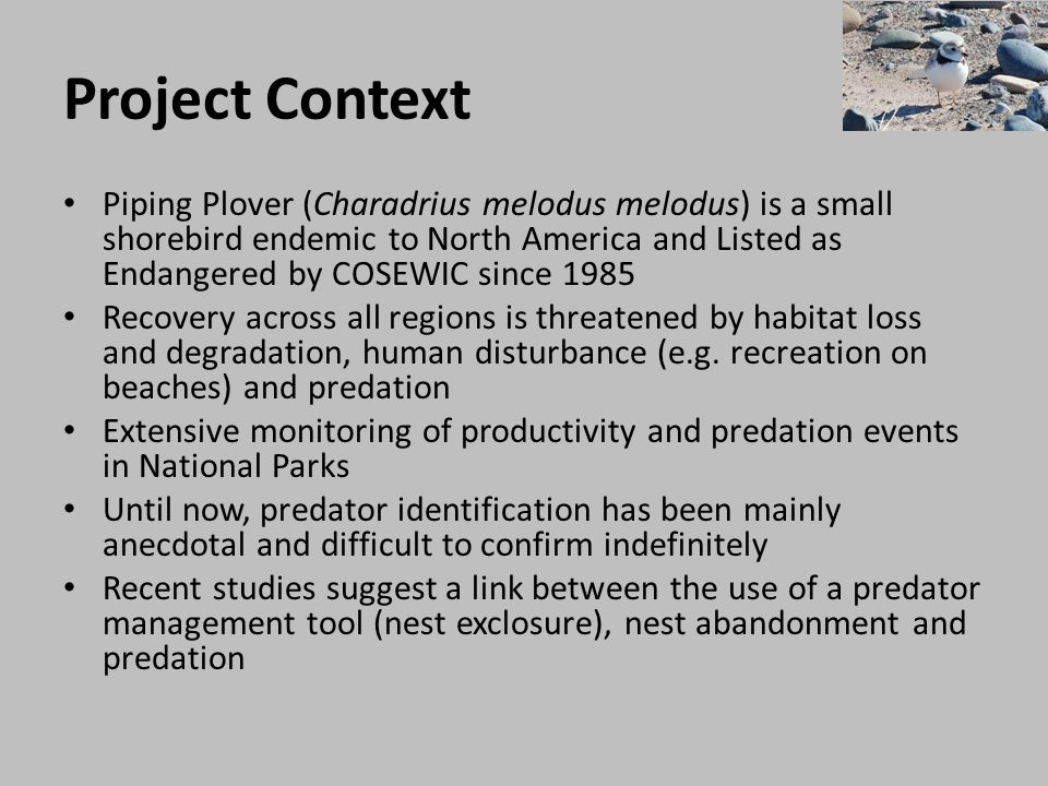 Project Context