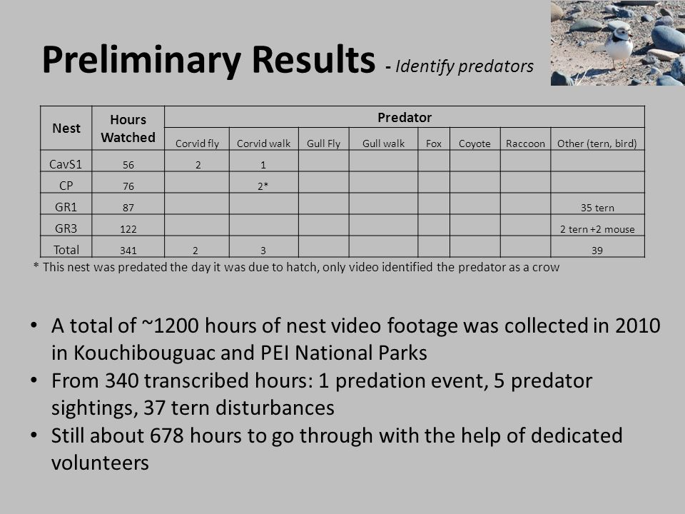 Preliminary Results - Identify predators