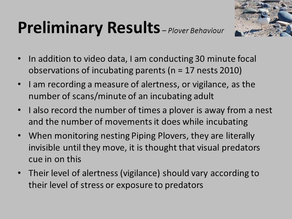 Preliminary Results – Plover Behaviour
