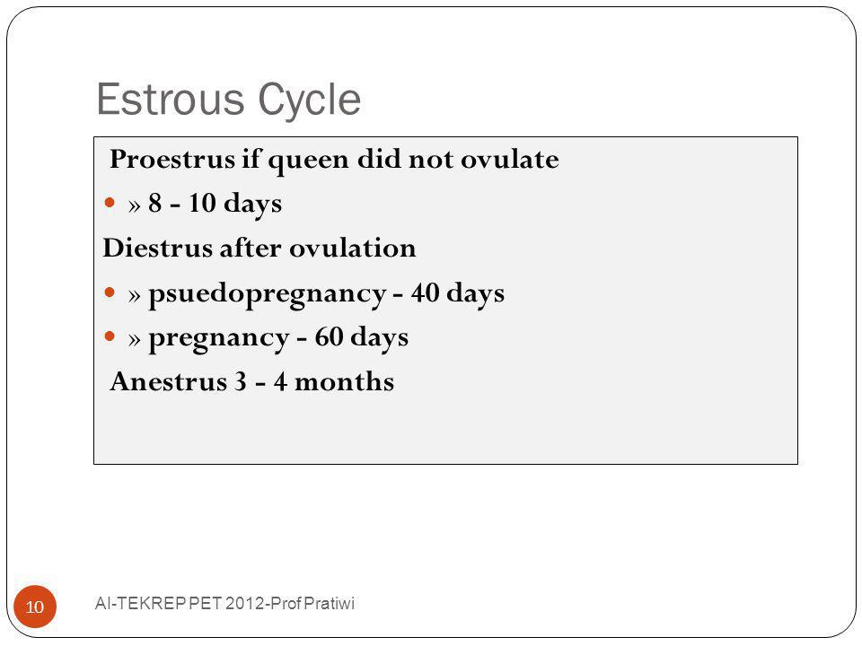 Estrous Cycle Proestrus if queen did not ovulate » 8 - 10 days