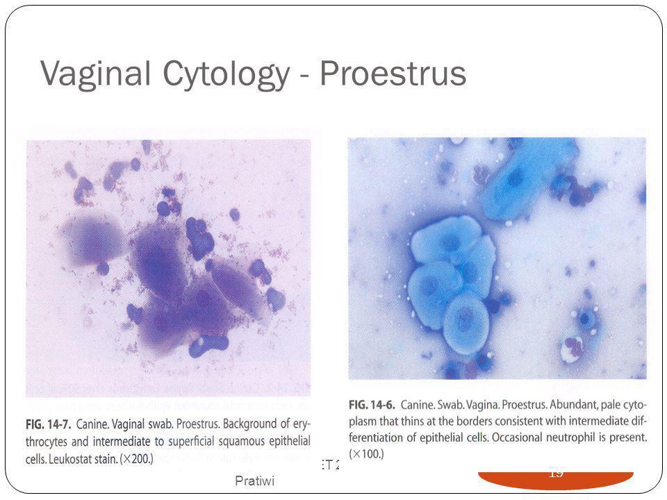 Vaginal Cytology - Proestrus
