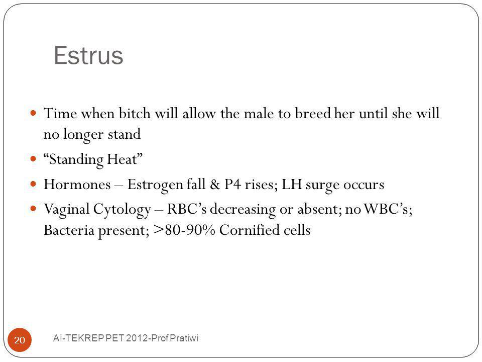 Estrus Time when bitch will allow the male to breed her until she will no longer stand. Standing Heat
