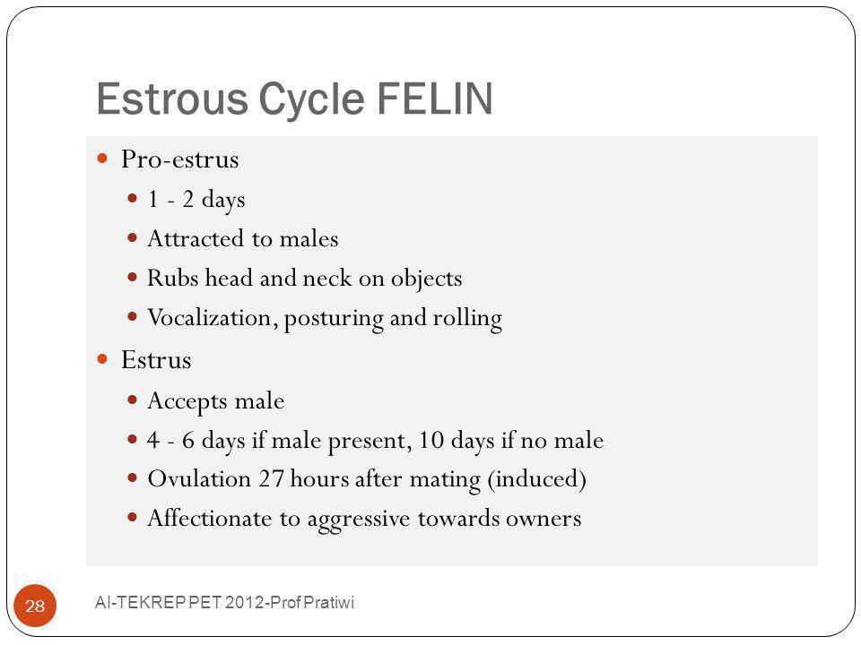 Estrous Cycle FELIN Pro-estrus Estrus 1 - 2 days Attracted to males