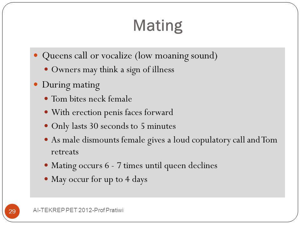 Mating Queens call or vocalize (low moaning sound) During mating