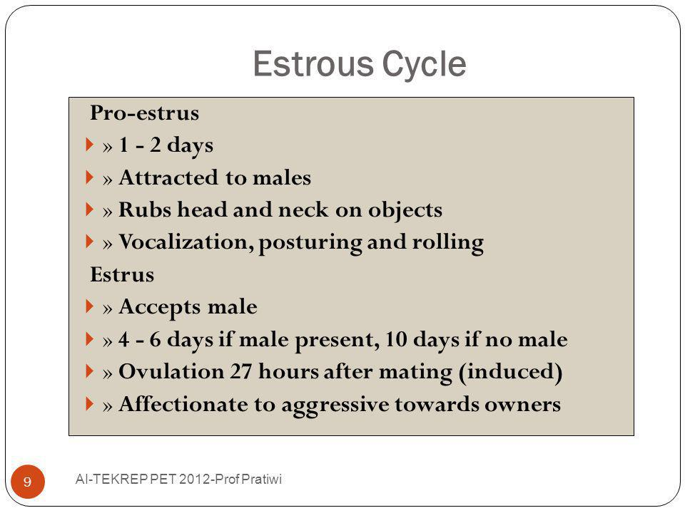 Estrous Cycle Pro-estrus » 1 - 2 days » Attracted to males