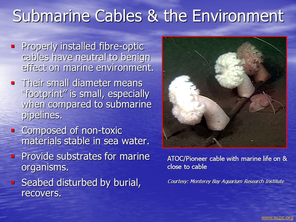 Submarine Cables & the Environment