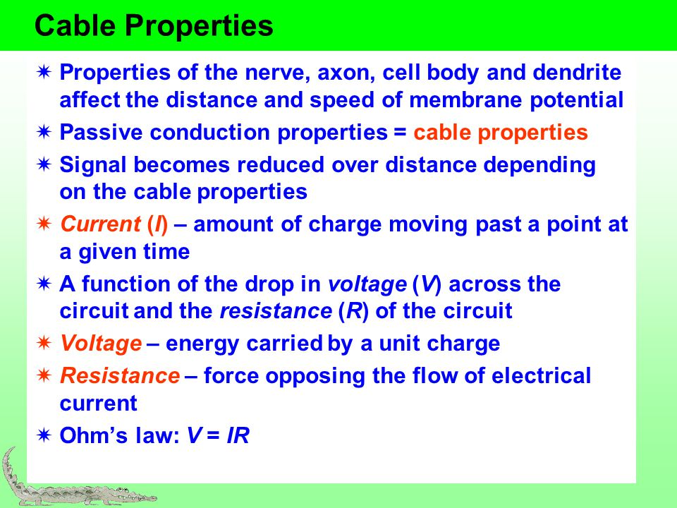 Cable Properties Properties of the nerve, axon, cell body and dendrite affect the distance and speed of membrane potential.