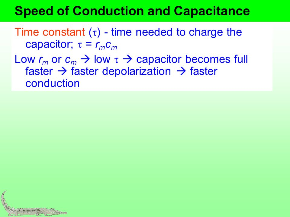 Speed of Conduction and Capacitance