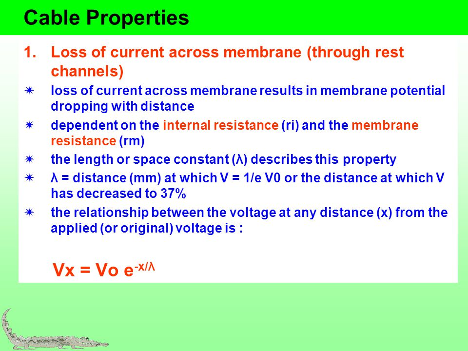 Cable Properties Loss of current across membrane (through rest channels)