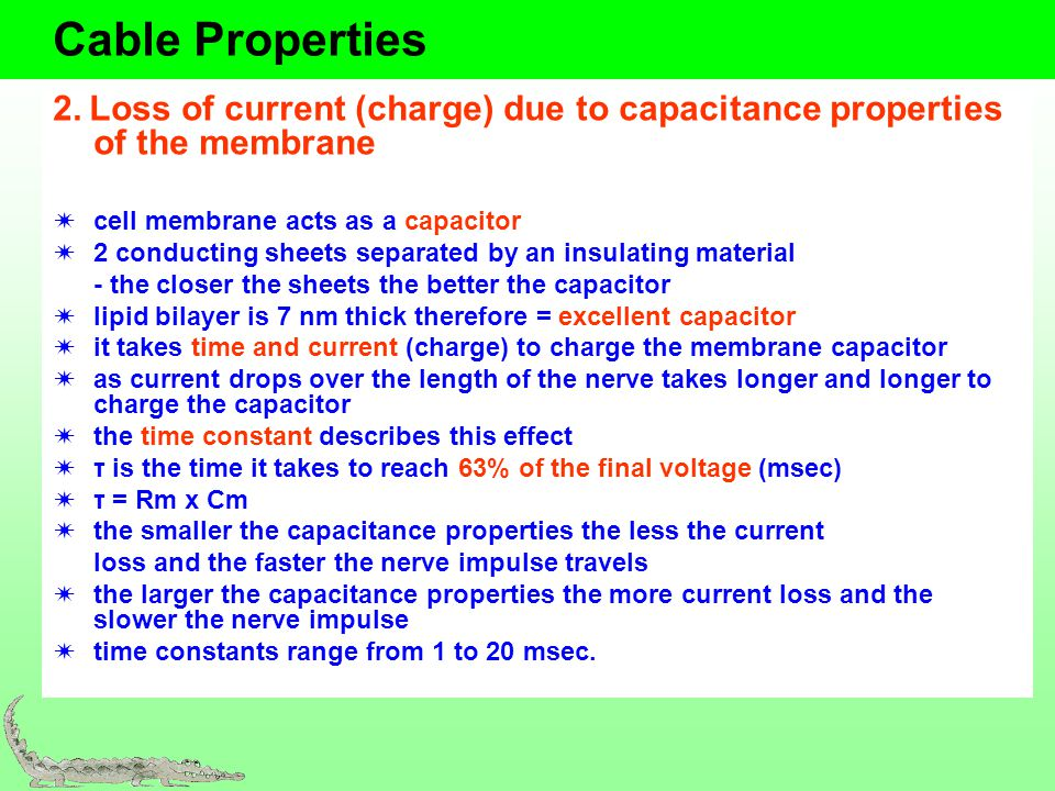 Cable Properties 2. Loss of current (charge) due to capacitance properties of the membrane. cell membrane acts as a capacitor.