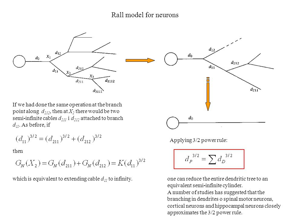 Rall model for neurons