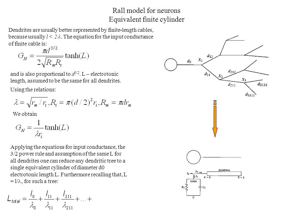 Rall model for neurons Equivalent finite cylinder