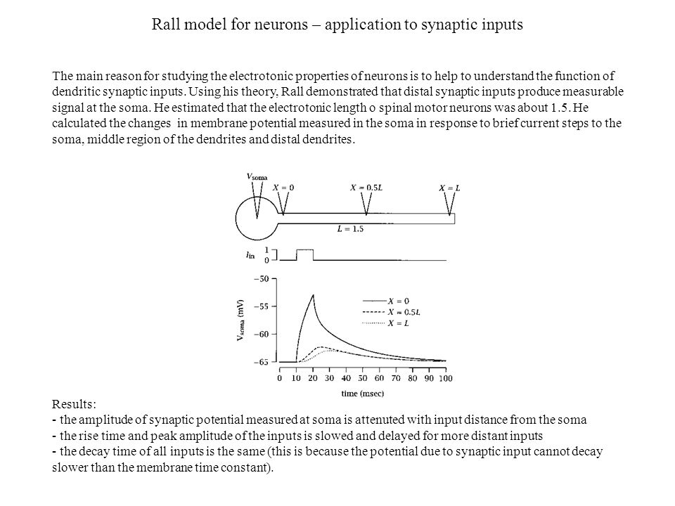 Rall model for neurons – application to synaptic inputs