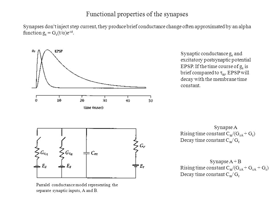 Functional properties of the synapses