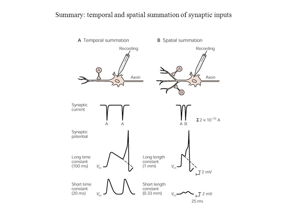 Summary: temporal and spatial summation of synaptic inputs