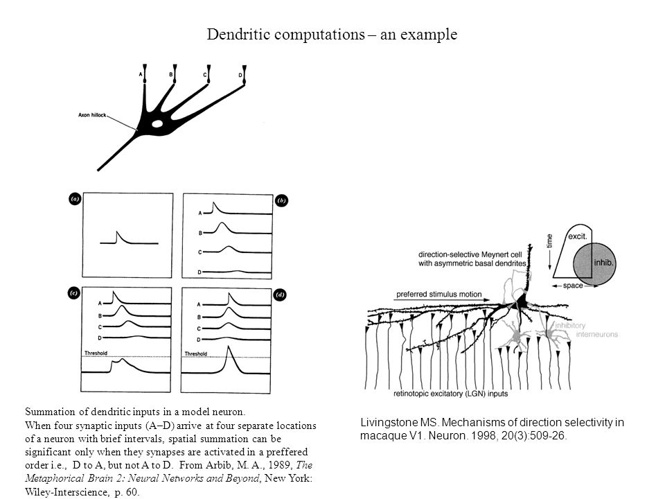 Dendritic computations – an example