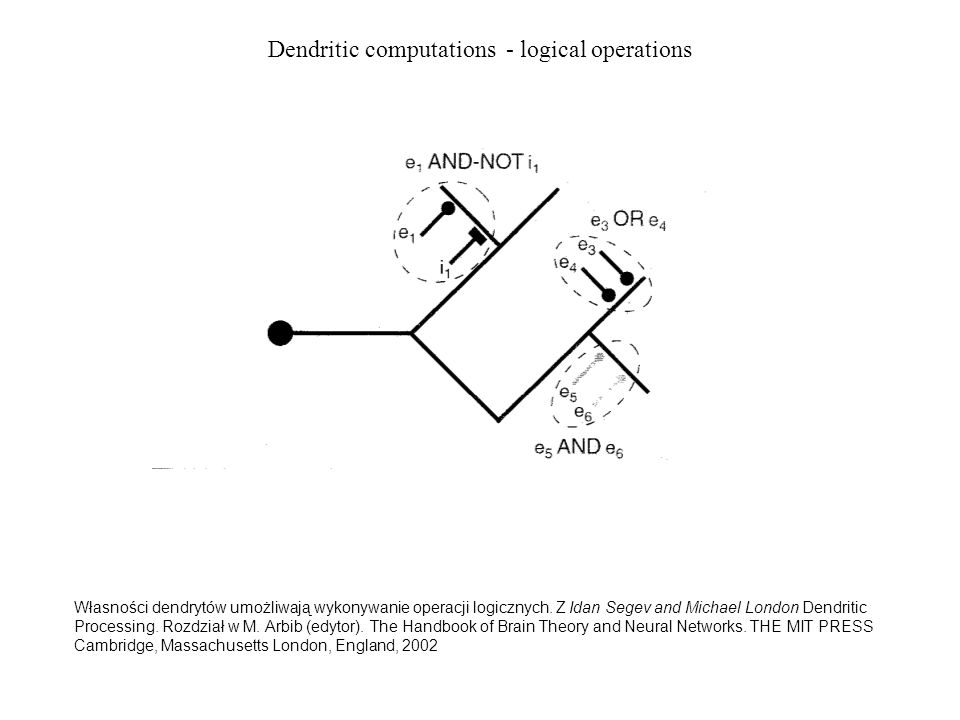 Dendritic computations - logical operations