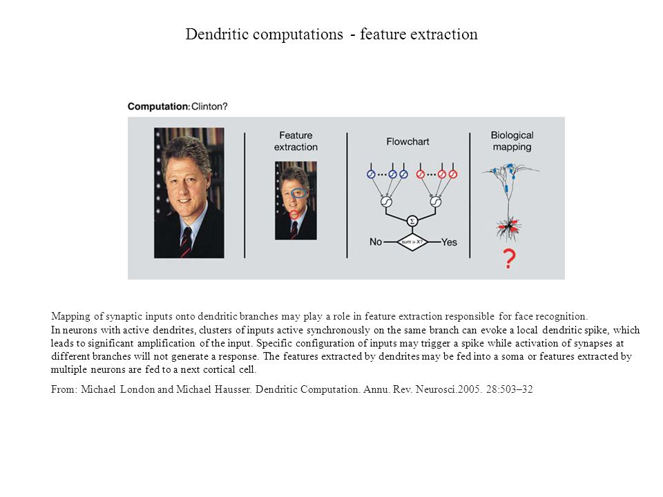 Dendritic computations - feature extraction