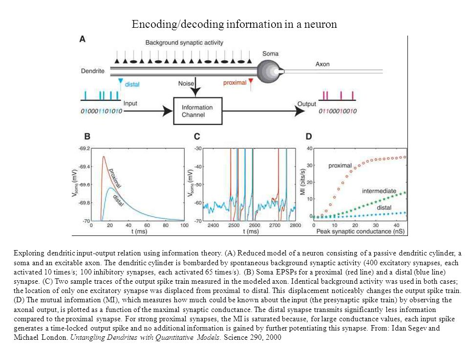 Encoding/decoding information in a neuron