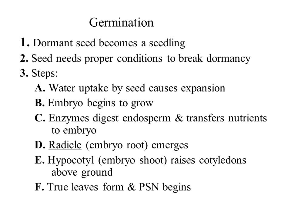 1. Dormant seed becomes a seedling