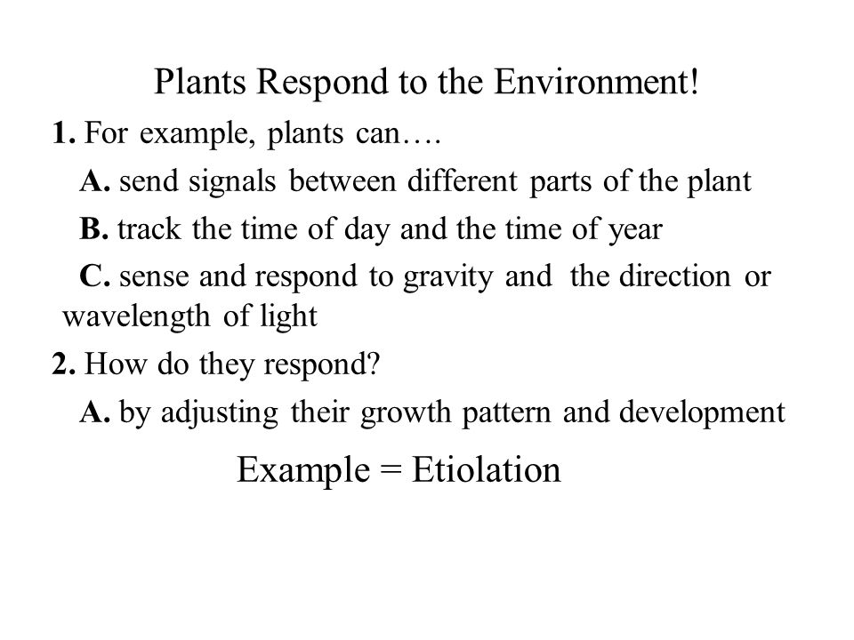 Plants Respond to the Environment!