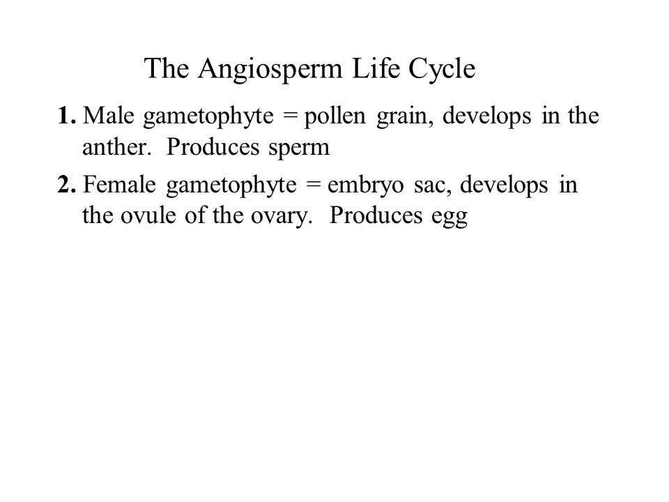 The Angiosperm Life Cycle