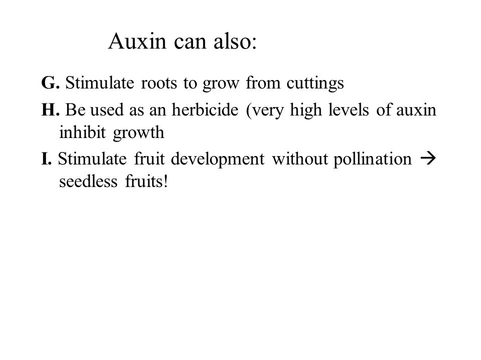 Auxin can also: G. Stimulate roots to grow from cuttings