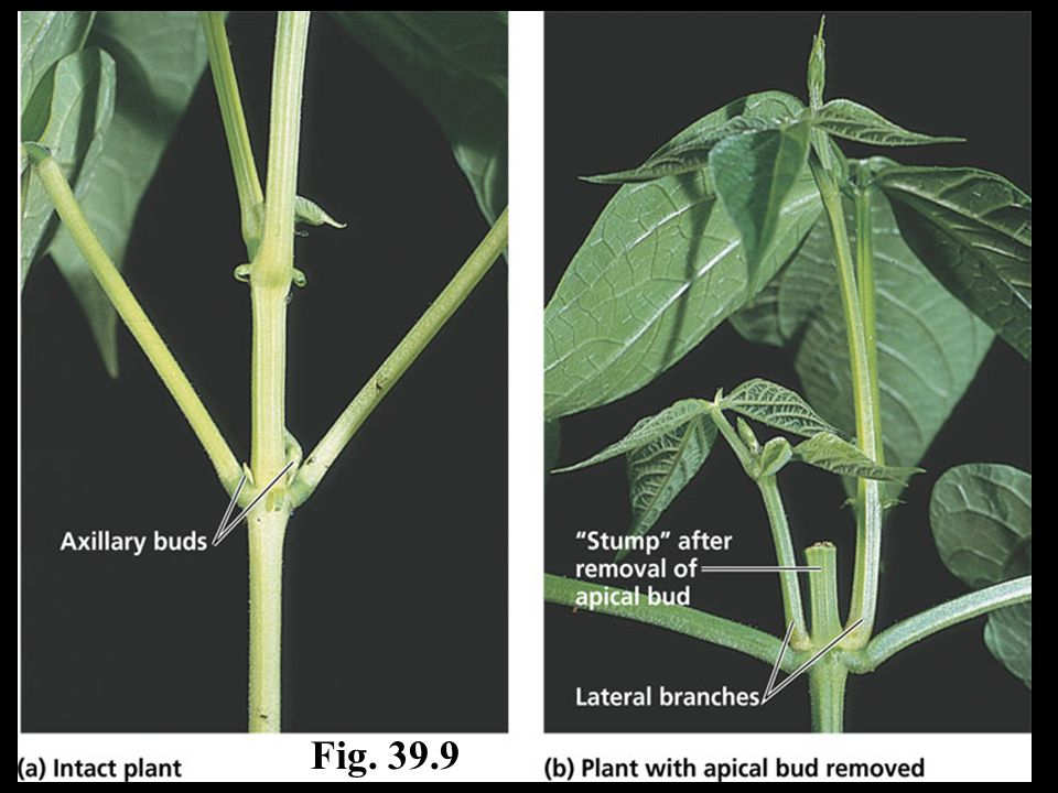 Fig. 39.9