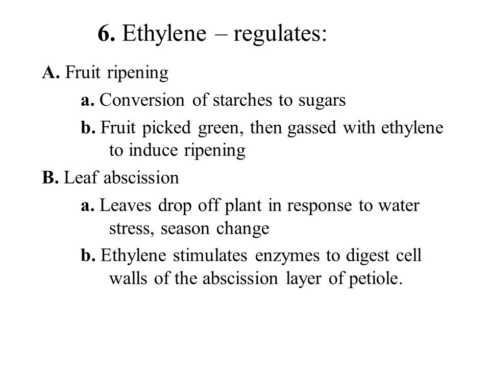 6. Ethylene – regulates: A. Fruit ripening