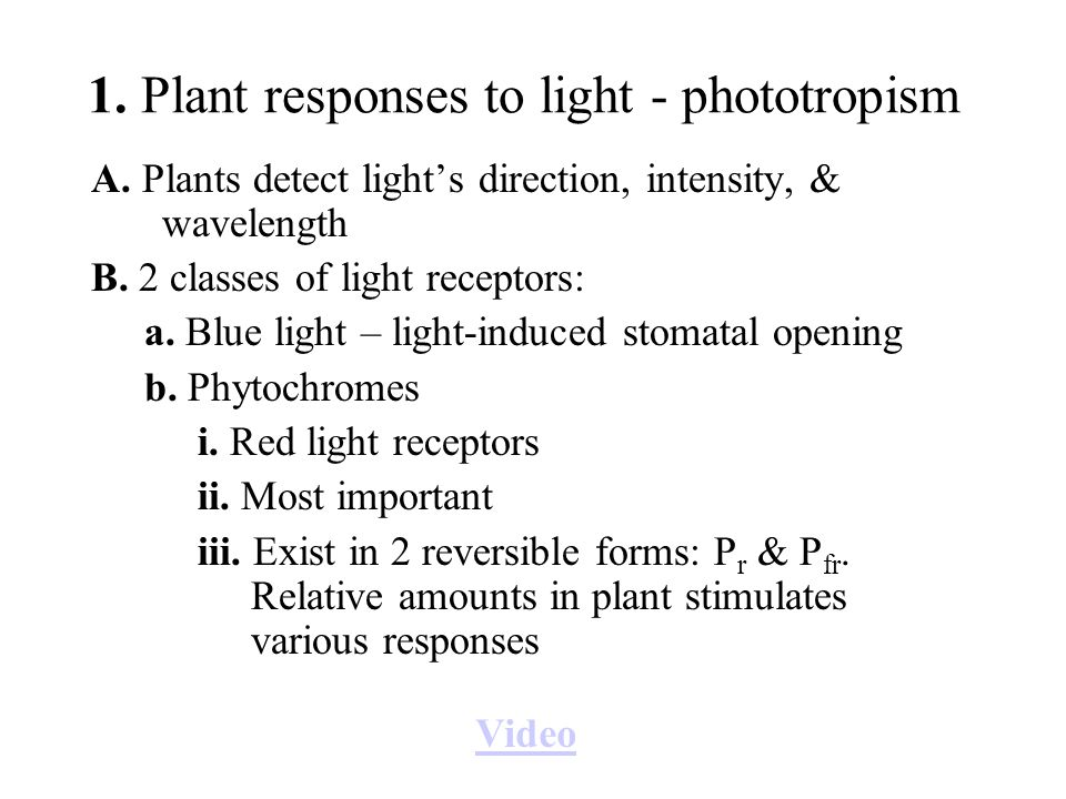 1. Plant responses to light - phototropism