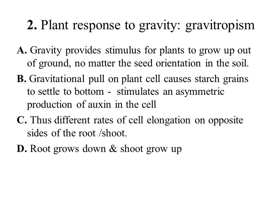 2. Plant response to gravity: gravitropism