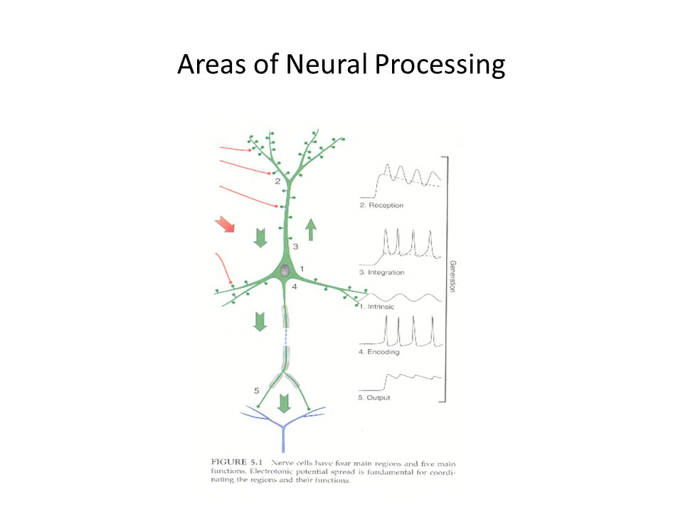 Areas of Neural Processing
