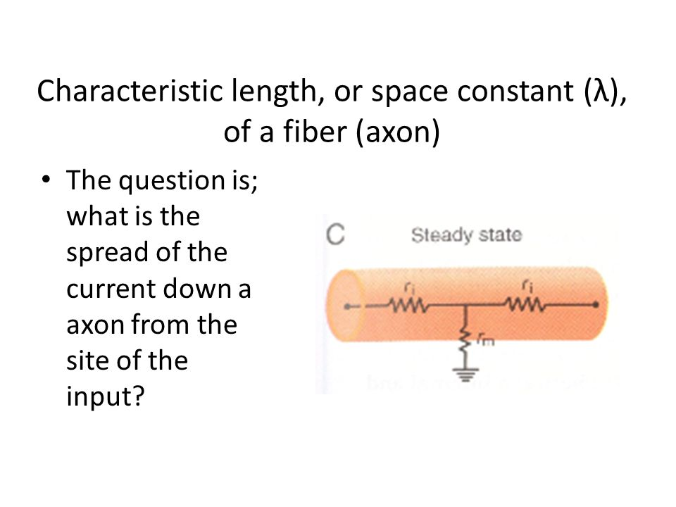 Characteristic length, or space constant (λ), of a fiber (axon)
