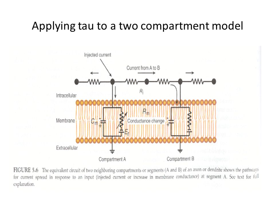 Applying tau to a two compartment model