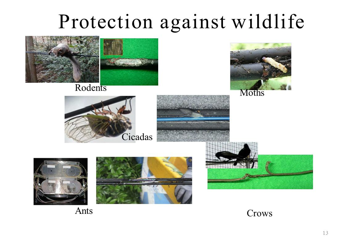 Protection against wildlife