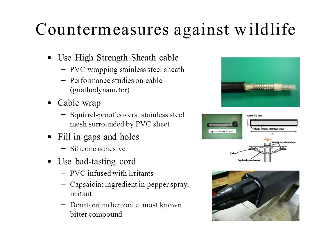 Countermeasures against wildlife