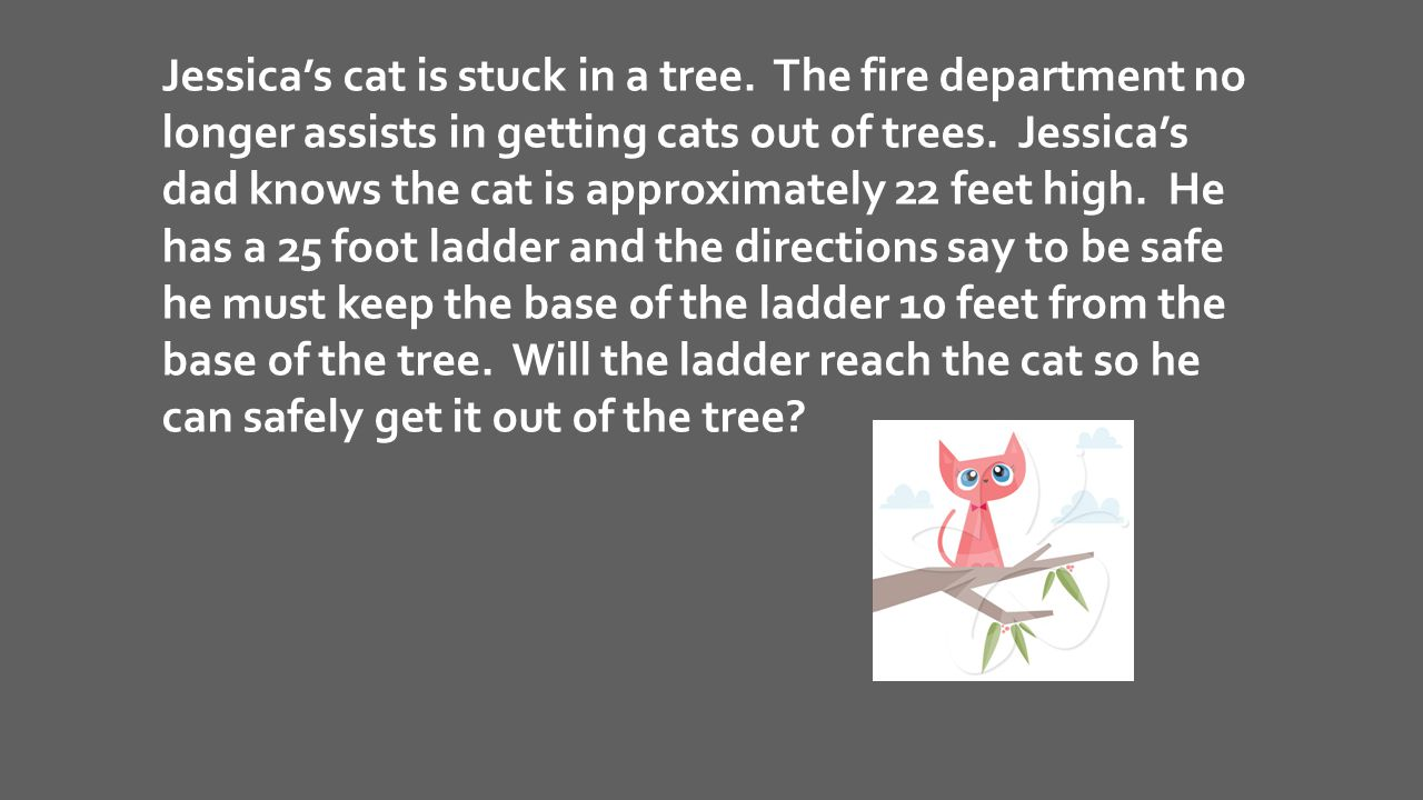 Jessica's cat is stuck in a tree