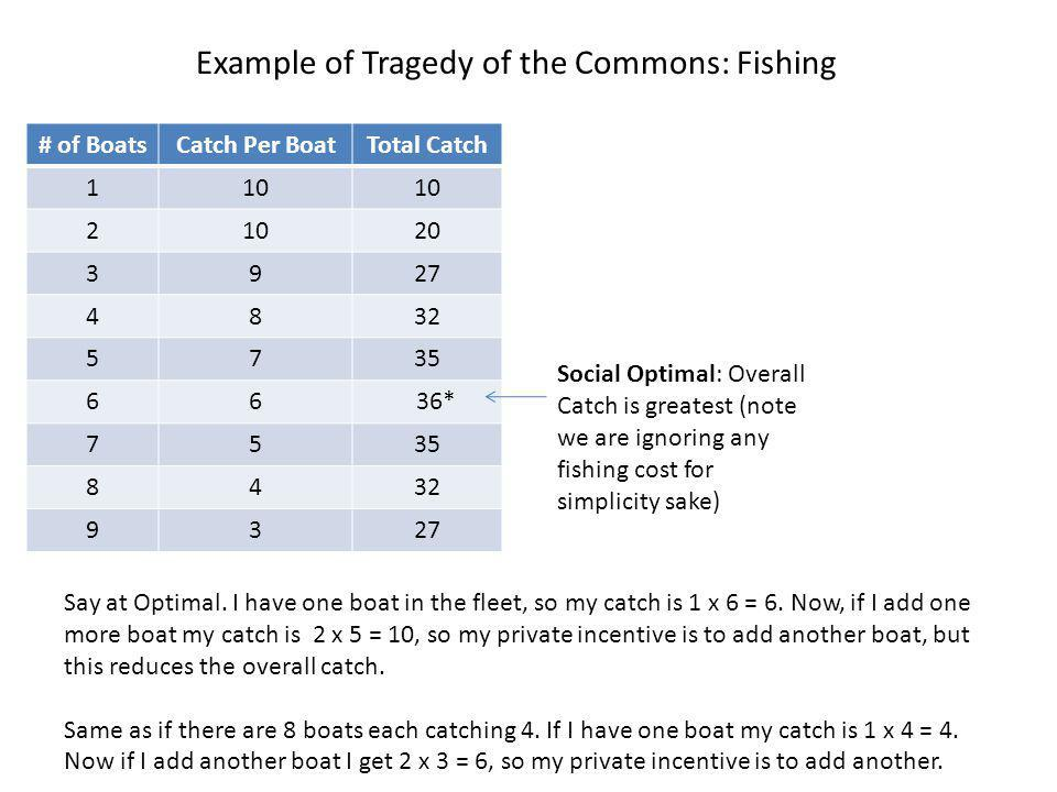 Example of Tragedy of the Commons: Fishing