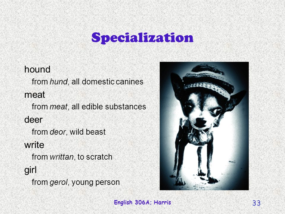 Specialization hound meat deer write girl