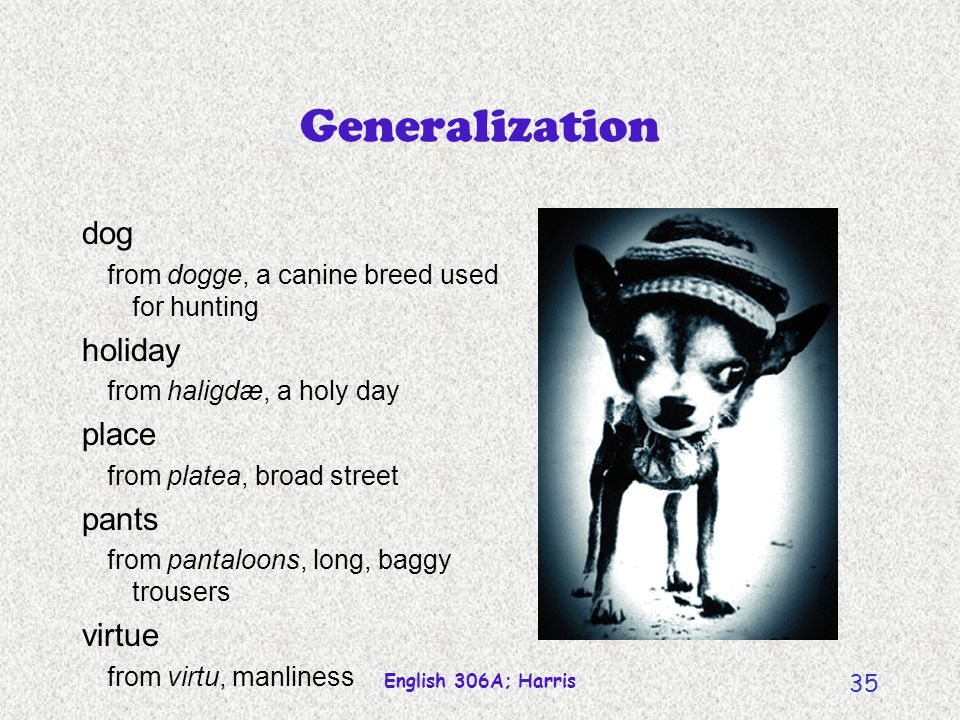 Generalization dog holiday place pants virtue
