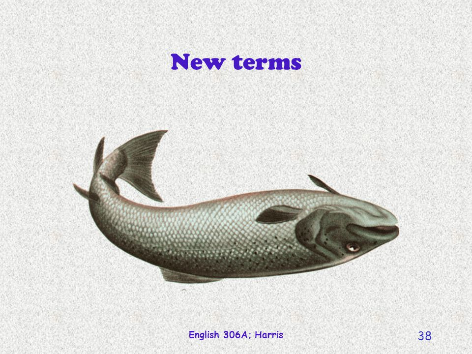 New terms English 306A; Harris